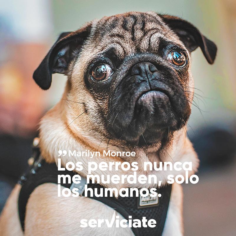 Los perros nunca me muerden, solo los humanos.