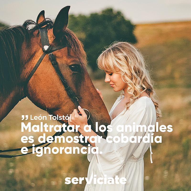Maltratar a los animales es demostrar cobardía e ignorancia.