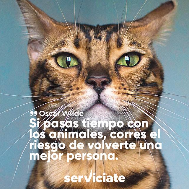 Si pasas tiempo con los animales, corres el riesgo de volverte una mejor persona.