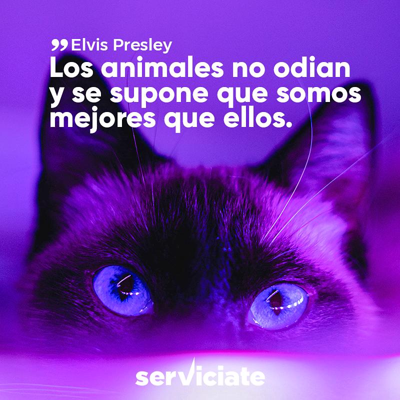 Los animales no odian y se supone que somos mejores que ellos.